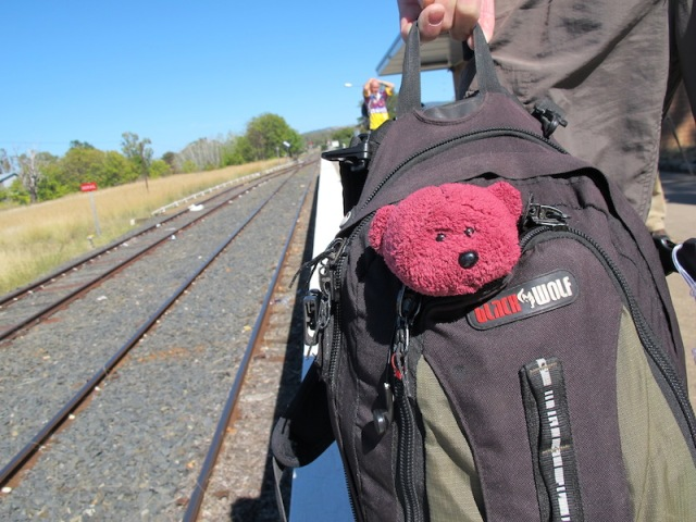 Apprehensive BBear waiting for the train to Sydney.