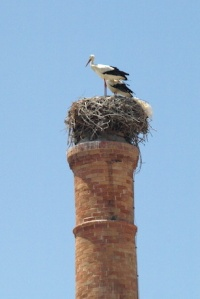 A white stork nest on top of a disused incinerator chimney.
