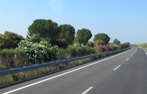The road between Seville and Tarifa.  The flowering shrubs in this photograph are oleanders.