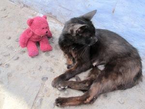 BBear meets a Chefchaouen cat