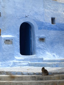 One of many Chefchaouen cats.