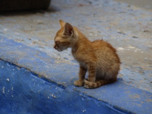 A poorly kitten. It was contemplating a jump down the step.