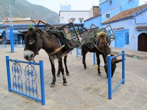 A couple of donkeys looking a little blue in the town square.