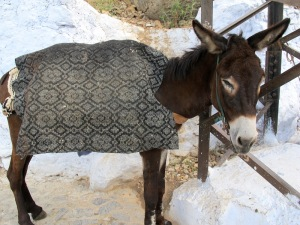A sleepy donkey we met on the way. Do donkeys conceptualise their station in life or is their mind a total blank?