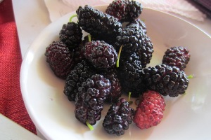 Mulberries fresh off the tree.