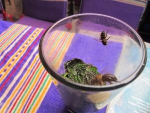 Bees sharing a mint tea.