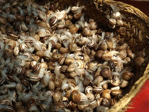 Live snails. Snails are used in Morocco to make a tasty soup called ghoulal.