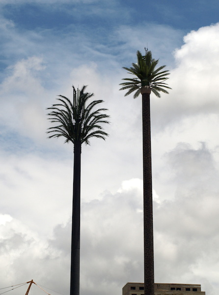 Twin artificial palm tree mobile phone towers.