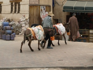A couple of donkeys with supplies heading into the covered markets.