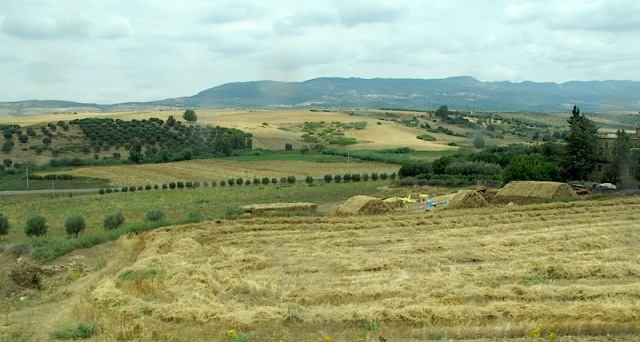 A view of productive lands from the train between Fez and Casablanca.