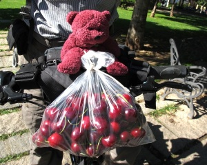 BBear securely strapped to the handle bars and guarding the cherries. The cherries were in season and they were delicious.