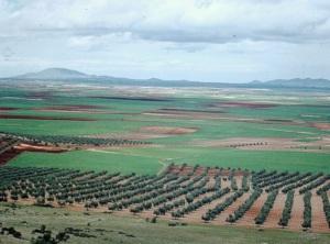 Orange groves near Valencia in 1973, the last time we were in the region.