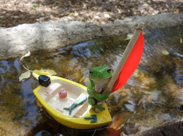 Green tree frog preparing to go to sea on one of my ceramic boats. A rare chance photograph.